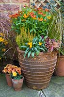 An autumnal container featuring Cheiranthus 'Sugar Rush Orange', Heuchera 'Blondie' Little Cuties series, Erica sparsa, Carex 'Prairie Sky' and Helenium mexicanum 'Poncho'