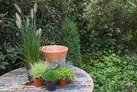 Ingredients required for creating an Autumnal pot featuring Pennisetum alopecuroides 'Hameln', Festuca glauca, Thymus x citriodorus 'Archer's Gold' and Thymus vulgaris 'Silver Posie'