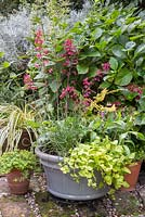 A Boggy autumnal pot featuring Lysimachia nummularia, Dryopteris erythrosora, Corkscrew Rush, Heuchera 'Paris' and Tricyrtis