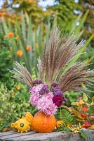 A pumpkin used as a vase for holding Chrysanthemums, Dahlia, Verbena bonariensis and Miscanthus sinensis 'Zebrinus'