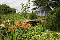 Blue and white garden shed and brown wooden footbridge over pond bordered by white Lysimachia clethroides - Loosestrife flowers, orange Hemerocallis - Daylilies, Acer - Maple tree in backyard garden in summer