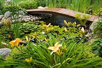 Wwooden footbridge over rock edged pond with Typha latifolia - Common Cattails, Papyrus - Ornamental Grass also known as Cyperus - Egyptian Paper Rush, mauve Nymphaea - Water Lilies bordered by orange Hemerocallis - Daylily flowers, yellow Alchemillia mollis - Lady's Mantle, Hosta plants in backyard garden in summer