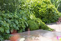 Stone path leading past border of Alchemilla mollis, Pittosporum tobira 'Miss Muffet' and Acacia cognata 'Limelight'. The Time In Between. RHS Chelsea Flower Show, 2015.