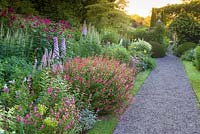 A path through the Main Perennial Border at Wollerton Old Hall Garden, Wollerton, Shropshire. Plants include: Delphinium elatum 'Conspicuous', Salvia involucrata 'Bethellii', Salvia jamensis 'Hot Lips', Veronicastrum, Phlox paniculata and Achillea.