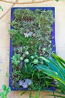 Assorted Succulent and bromeliad living wall in Jim Bishop's Garden. San Diego, California, USA. August.