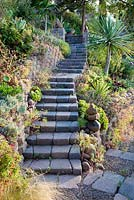 View of garden steps through mixed beds to Jim Bishop's Garden. San Diego, California, USA. August.