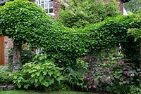 A large ivy swag made from wooden stakes and chicken wire. Underplanting includes ferns and Cercis.