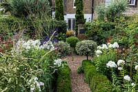 In 12m x 6m town garden, formal parterre with box and variegated holly standards, and box edged beds of Phlox paniculata 'David', Aconitum 'Spark's Variety', Thalictrum 'Elin', sanguisorba and red or pink persicarias.