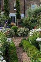 In 12m x 6m town garden, formal parterre with box and variegated holly standards, and box edged beds of Phlox paniculata 'David', Aconitum 'Spark's Variety' and red or pink persicarias.