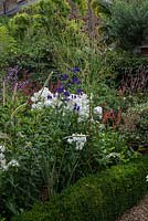 In 12m x 6m town garden, formal parterre with box edged beds of Phlox paniculata 'David', Aconitum 'Spark's Variety', red Persicaria amplexicaulis 'Firetail' and 'Rosea', Sanguisorba 'Cangshan Cranberry' and Thalictrum 'Elin'.