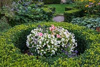 A large container with Begonias and Linaria in the middle of a shaped buxus sempervirens circle.