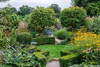 A suburban garden with a circular structure created by shaped box and a clover lawn. Two Photinia x fraseri standards divide the garden and provide height. Deep borders of mixed planting includes Astrantia, Rudbeckia, Salvia, Verbena and ornamental grasses.