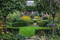 A view of a suburban garden through two Photinia x fraseri standards. The garden has a circular structure created by shaped box and a clover lawn. Deep borders of mixed planting includes Geranium, Rudbeckia, Salvia, Verbena and ornamental grasses.