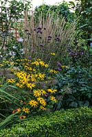 A colourful mixed late summer border with Rudbeckia, Crocosmia, Verbena bonariensis and Calamagrostis grass, edged with Buxus sempervirens.