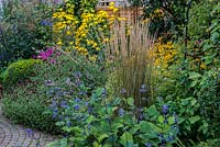 A colourful mixed late summer border with Salvia, Rudbeckia, Knautia, Cosmos and Calamagrostis grass with Buxus sempervirens balls.