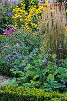 A colourful mixed late summer border with Salvia, Rudbeckia, Knautia, Cosmos and Calamagrostis grass, edged with Buxus sempervirens. In foreground, Clematis heracleifolia 'Wyevale', a herbaceous perennial.