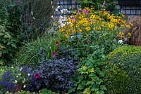 A colourful mixed late summer border with Rudbeckia, Japanese Anemone, Dahlia and Pennisteum grass with Buxus sempervirens balls.
