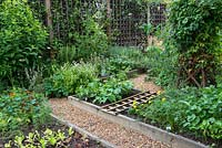 A town garden potager with raised vegetable beds and border with herbs and perennials. Plants include nasturtium, salad leaves, carrots, dwarf french beans, oregano, rosemary and Verbena bonariensis.