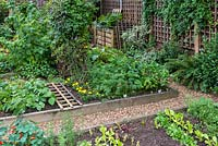A town garden potager with raised vegetable beds planted with salad leaves, Chantenay carrots, Duchess parsnips, raspberries, marigolds and Verbena bonariensis.