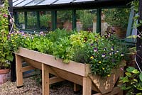 A raised wooden planter with thyme, violas, cut and come again lettuce, rocket, spinach and carrots.