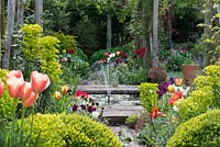 Pergola, made from chestnut poles, spans brick path edged in box balls, Euphorbia characias subsp. wulfenii, geums, Cerinthe major 'Purpurascens' and tulips rising above a froth of forget-me-nots. A small fountain plays in the centre of the pergola.