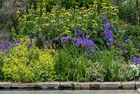 A bank planted with:Campanula persicifolia, Alchemilla mollis, Phlomis russeliana and flag iris.