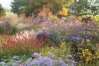 View of mixed perennial border at Ellicar Gardens