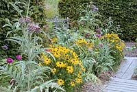 Border with Rudbeckia 'Marmalade' Cynara scolymus - Artichoke sheltered by hedges by boarded path