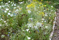 Wildflower border with Foeniculum - Fennel Centaurea cyanus - Cornflower Malva and Ammi majus edged by logs and bark chipping path
