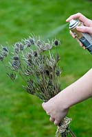 Creating a festive table decoration with garden flowers and seed heads. Spray dried sea holly with silver paint outside.
