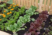 Small vegetable patch in garden with beetroot, red lettuce, Pak Choi, carrots and marigold - The Sanctuary Garden for St Michael's Hospice, designed by Hannah Genders, RHS Malvern Spring Festival 2015