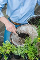 Planting a herb hanging basket step by step. Fill the bottom of the basket with gravel for drainage and then cover with potting compost.