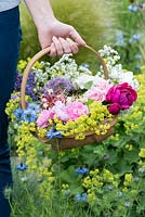 A trug of fresh flowers including roses, peonies, lady's mantle, love in the mist, honeysuckle catmint