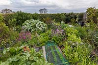 View of cottage vegetable garden with ornamental plants grown for companion planting and for decorative effect. Main crops include rhubarb, chard, Cynara cardunculus - cardoon, leeks, salsify, peas, benas, purple sprouting broccoli and netted beetroot, carrots and lettuce in foreground.