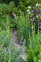 Narrow paved pathway to stone sculpture of girl carrying basket on shoulder. Path flanked by Sisyrinchium striatum, Nepeta - catmint, shrubby purple-leaved clematis, Iris sibirica, alliums. Magnolia next to girl.