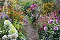 Path through summer borders. Dahlia 'Rocco', Persicaria amplexicaulis 'Summer Dance', Pennisetum, Helenium 'Luc', Phlox 'Purper mantel', Helenium 'Goldrausch', Helenium 'Chipperfield Orange', Foeniculum vulgare 'Giant Bronze', Eupatorium.