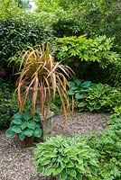 Hosta collection arranged in corner of garden around phormium in stone urn with background of shrubs including elaeagnus, fatsia and griselinia.