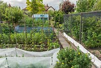 Well tended vegetable garden. Plastic mesh protection against carrot fly, soft fruit in cage, runner beans on bamboo frame, brassicas with bird protection. Small aluminium greenhouse.