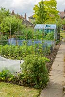 Well tended vegetable garden. Plastic mesh protection against carrot fly, runner beans on bamboo frame, brassicas with bird protection. Small aluminium greenhouse.