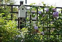 Trellis with climbing Clematis 'Josephine' and nest house. Family Fabry - Mathijs. Belgium