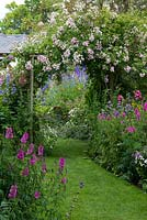 A cottage garden with grass path running through informal herbaceous borders with delphinium, phygelius, campanula, feverfew, phlox, penstemon, foxglove, hardy geranium, prairie mallow and tobacco plant. On rustic wooden arch, rambling Rosa 'Belvedere'.