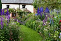 A grass path through double herbaceous borders with cottage style plants including aconites, delphinium, thalictrum, campanula, feverfew, leucanthemum, centaurea, alchemilla, foxglove, roses, catmint, hardy geranium and poppy.