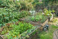 Raised vegetable beds in summer with carrots, lettuces, potatoes and beans.