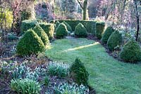 Box cones and hedging in winter garden at Weeping Ash, Cheshire, February