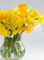 Variety of garden Narcissi in glass vase - Jetfire, Tete a Tete,, Bridal Crown, Snipe, Eaton Bells