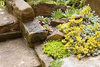 Detail of bed adjacent to garden stone step with Sedum and Echeveria