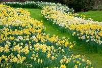 A carpet of daffodils at Felley Priory. April.