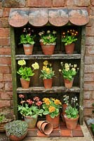 Auricula theatre made from salvaged timber and old roof and quarry tiles. Varieties include Primula auricula 'Bradford City', 'Connaught Court', 'Lord Seye and Sele', 'Sirius', 'Brownie', 'Shaun' and 'Merlin Stripe'