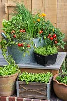 A recycled wash tub planted with spring onions, cos lettuce, Tomato 'Losetto' and marigolds, Calendula officinalis, a companion plant to deter whitefly from tomatoes. Alongside pots with salad leaves and vegetable seedlings.
