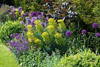 A tough border in late spring planted with Allium 'Purple Sensation', Euphorbia characias subsp. wulfenii, Erysimum 'Bowel's Mauve', self-seeded Aquilegia vulgaris, purple hazel with evergreen yew and box.
